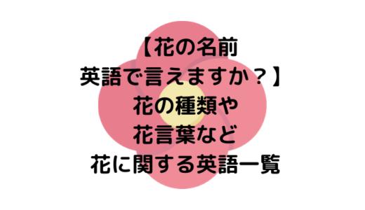 【花の名前英語で言えますか?】花の種類や花言葉など花に関する英語一覧