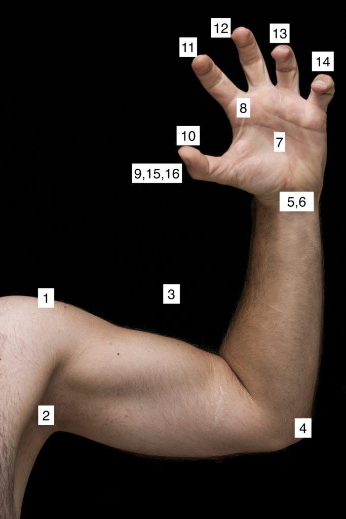 腕の英語の名前の画像