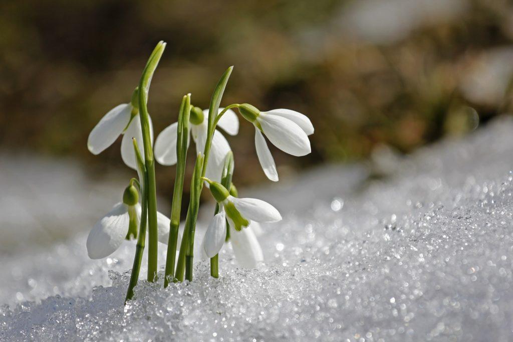 冬の花画像