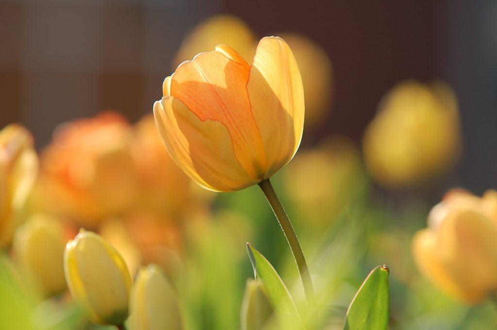 春の花画像